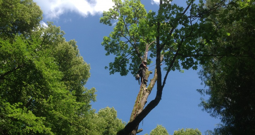 The removal of dangerous trees
